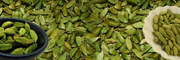 cardamom cultivation