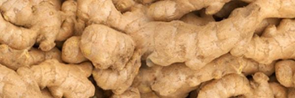 ginger cultivation