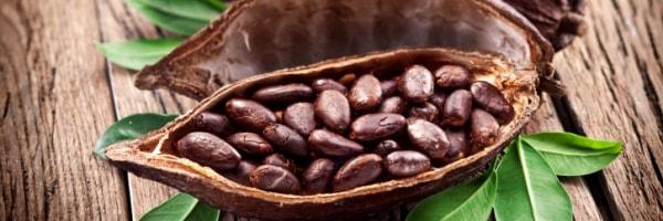 cocoa cultivation