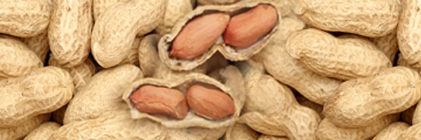 Peanut / groundnut cultivation