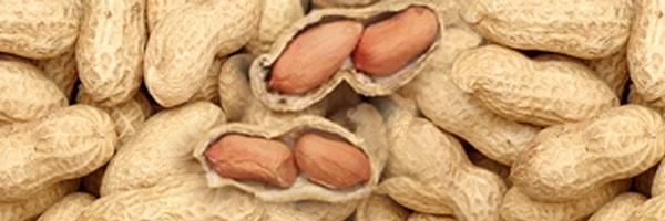 Peanut / groundnut cultivation