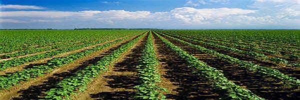 कृषि पद्धतियाँ