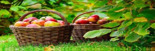 जैविक खेती से लाभ