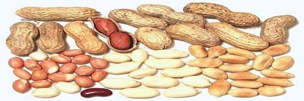 groundnut variety-girnar