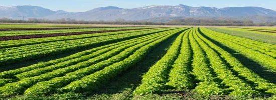 जैविक खेती से फसल