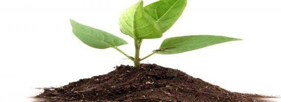 पौध टॉनिक