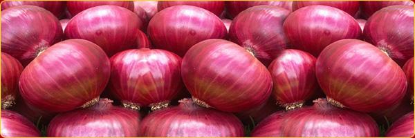 kharif onion production