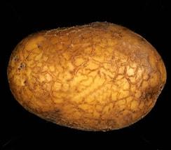 potato blackscurf