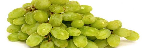 निर्यात के लिए अंगूर की खेती