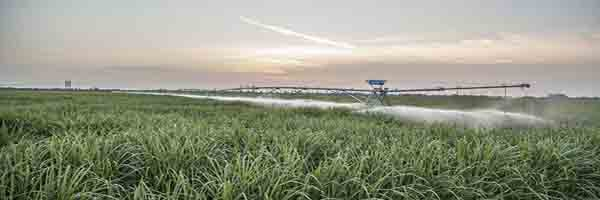 Conventinal method of Irrigation in sugarcane