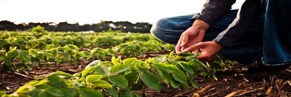 crop protection technologies
