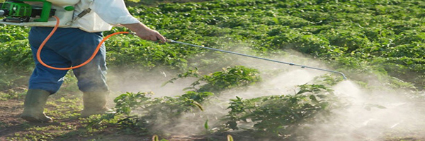 Pesticide Use in Vegetables