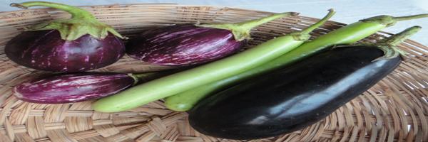 brinjal varieties