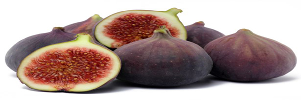 fig cultivation