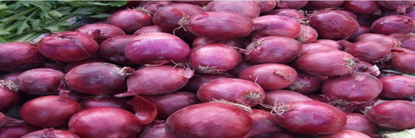IPM for onion crop