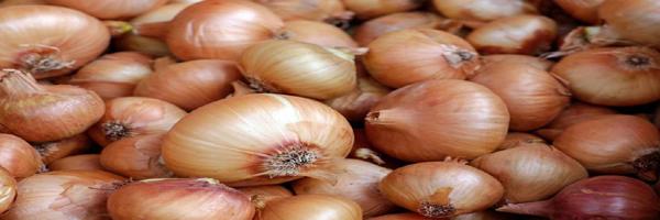 fertilizers of onion