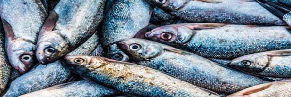 fish-disease