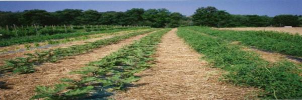 कृषि सलाह 07