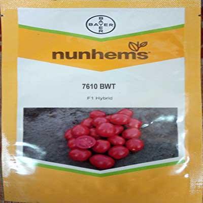 7610 BWT tomato seed